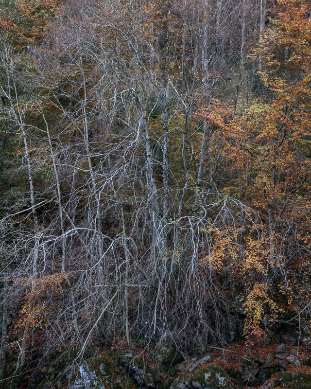 Autumn At Logie
