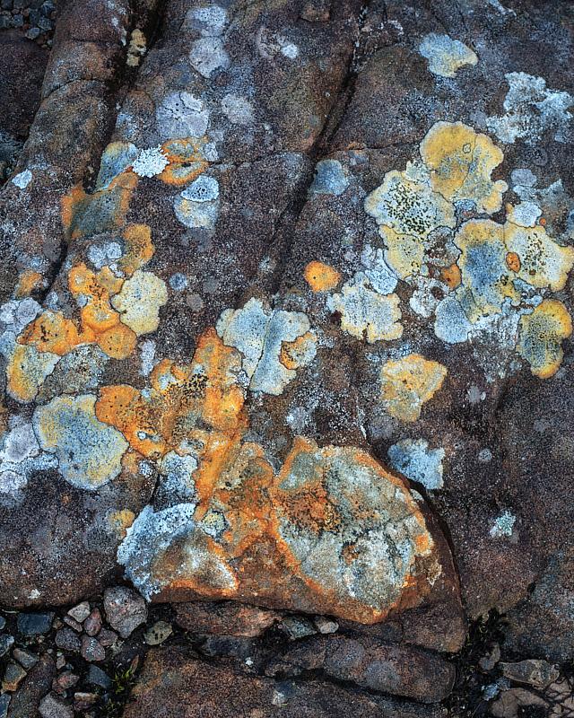 Lichens - Loch Maree