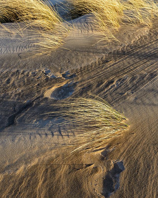 Dune Study No 3