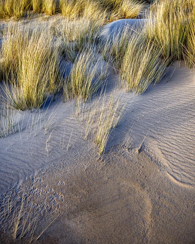 Dune Study No 2
