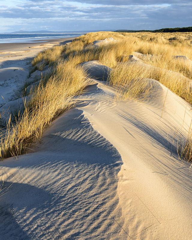 Blown Dunes