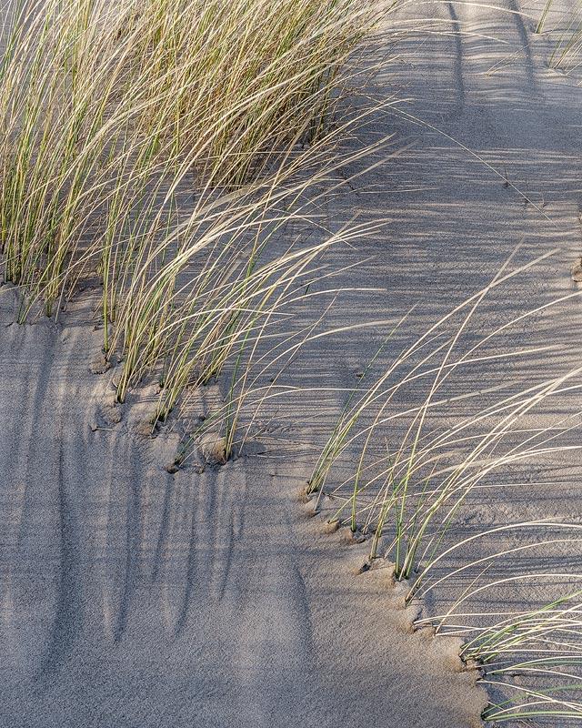 Dune Study No 1