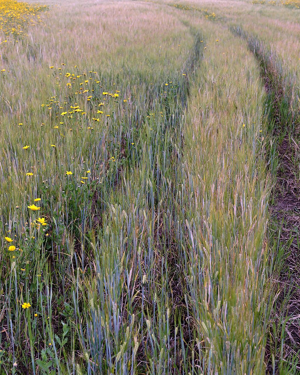 Through A Field