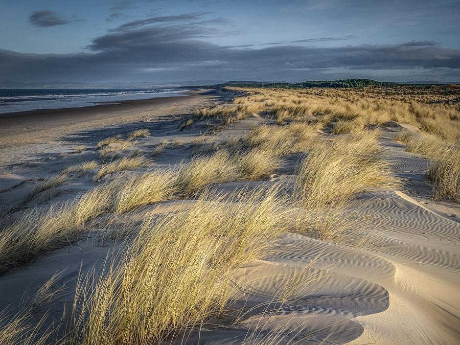 Marram And Dunes