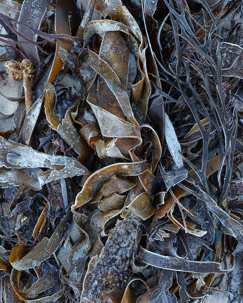 Frosted Seaweed