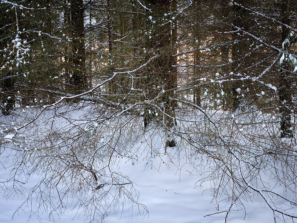 Winter Forest - No. 1