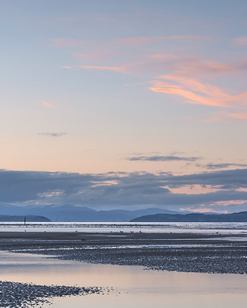 Pink Ribbons - Findhorn