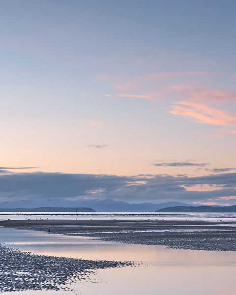 Pink Ribbons No.2 - Findhorn