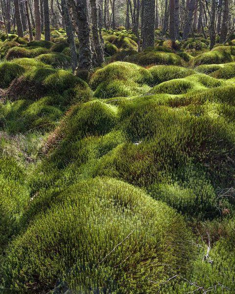 A Moss Blend