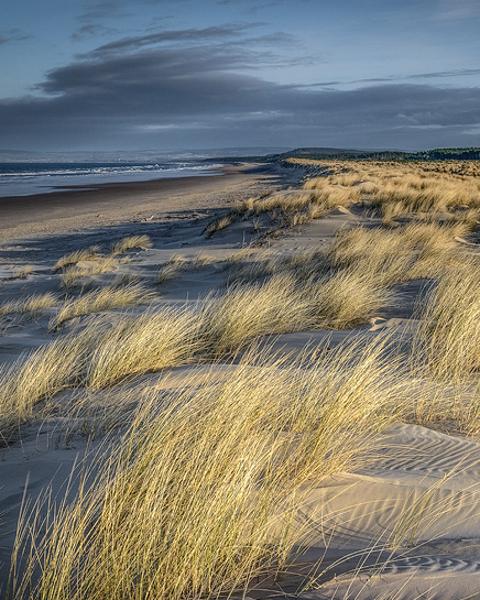 Marram And Dunes (wide)