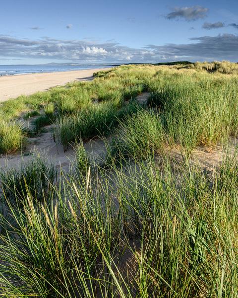 Spring Dunes