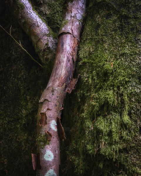 Hidden Branches